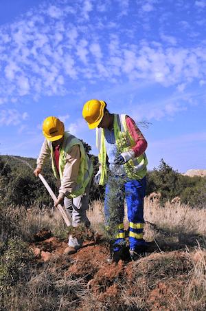Eldorado Gold planting trees