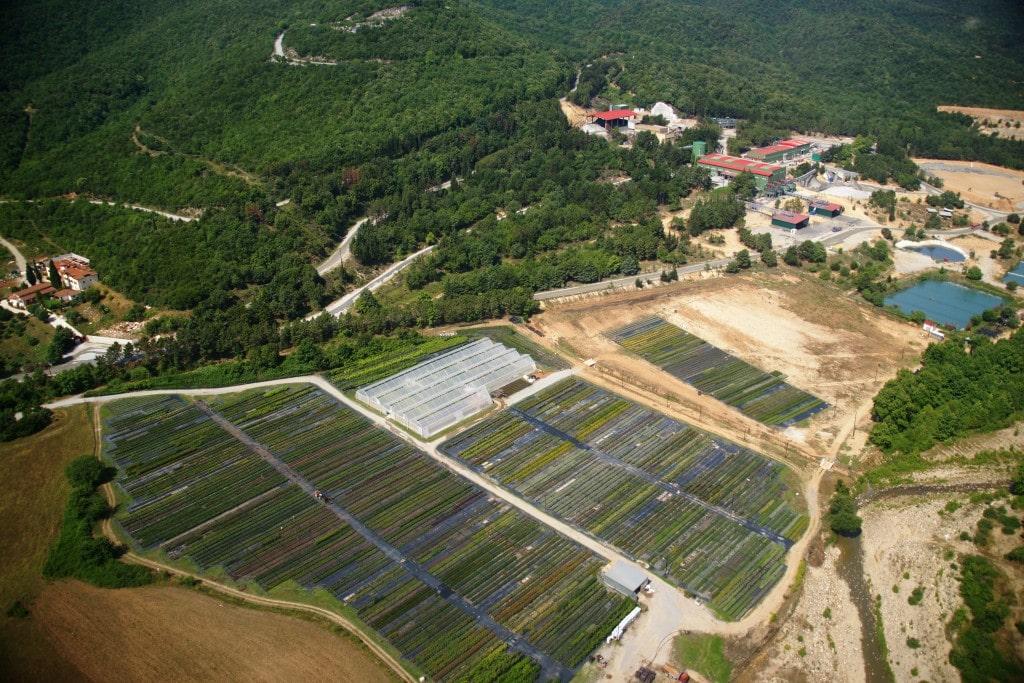Aerial view of Olympias Nursery in Greece