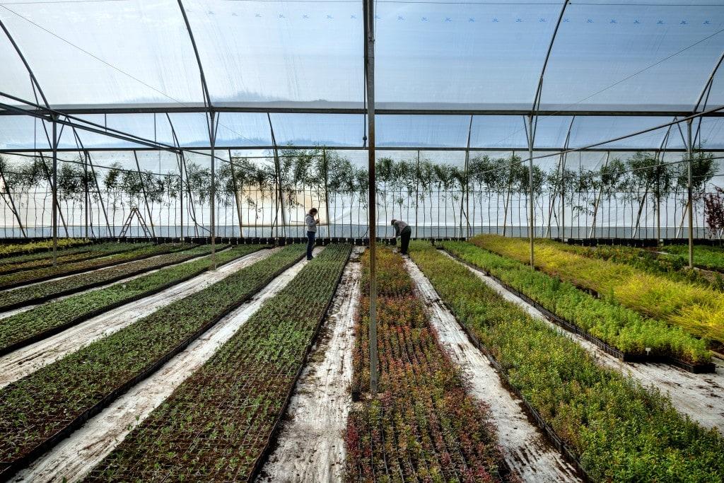 Olympias Plant Nursery