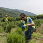 environmental monitoring in Greece